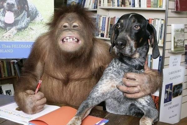 Burç ve Uyumluluk: Maymun Kadın ve Maymun Adam